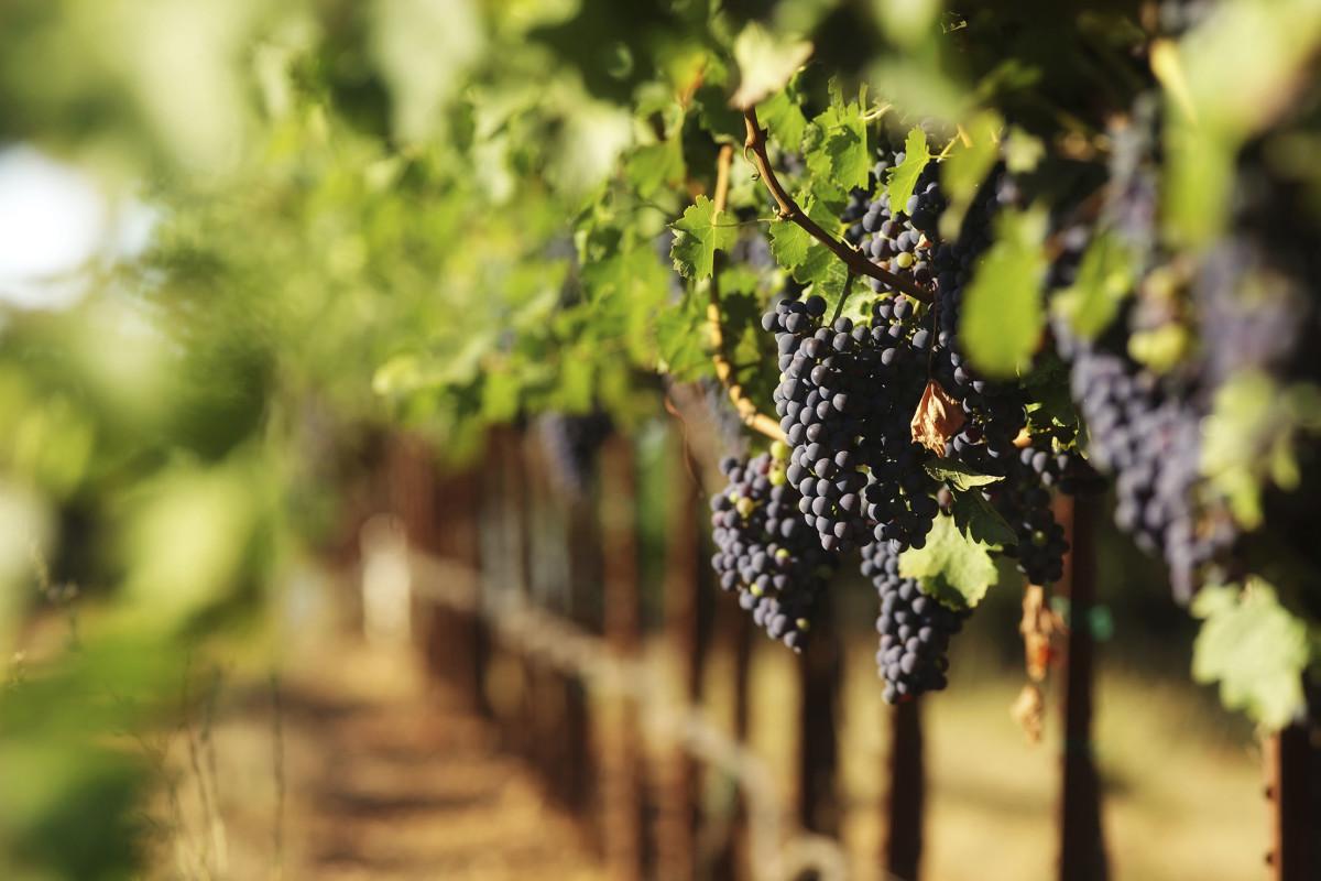 Pennsylvania vineyards