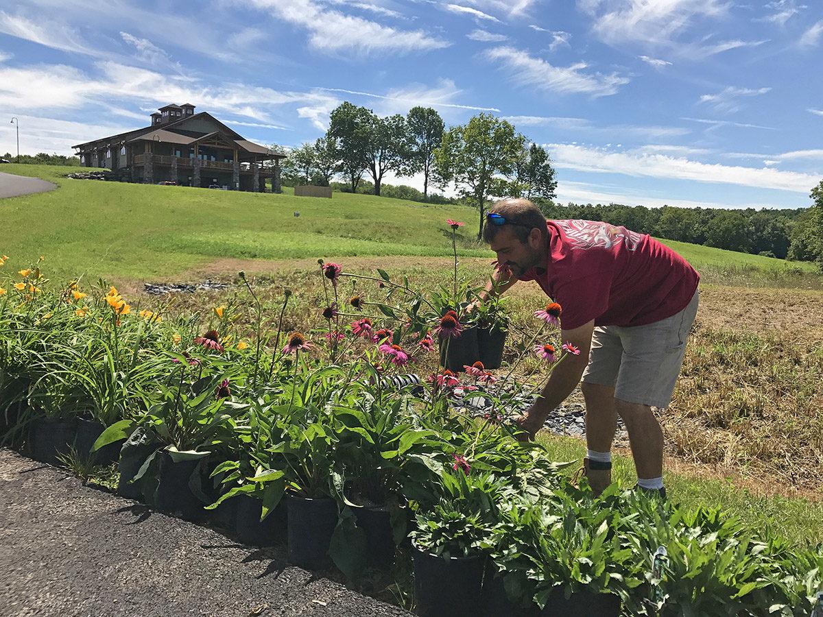 Gardener Planting Rain Garden Flowers